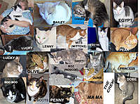 Name: 121510.jpg