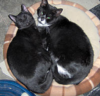 Name: LUCKY-LB_1208b.jpg