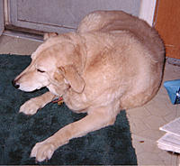 Name: GINGER.jpg
