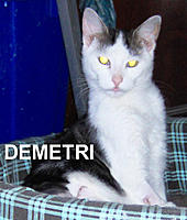 Name: DEMETRI.jpg