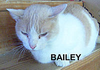 Name: BAILEY4an.jpg