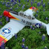 TEXAN in the Bluebonnets
