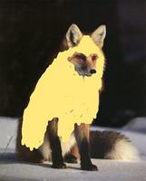 Name: Fox-and-Winter-Coat-Print-C10001410.jpg