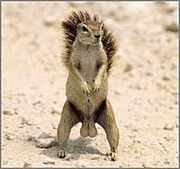 Name: squrrel.jpg
