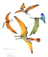 Name: p Pterosaurs.jpg