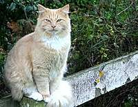 Name: Cat on fence.jpg