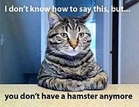 Name: hamster.jpg