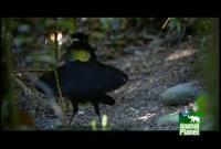 Name: exotic-birds1.jpg Views: 92 Size: 43.0 KB Description: