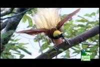 Name: exotic-birds6.jpg Views: 80 Size: 51.8 KB Description: