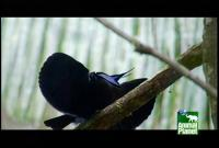 Name: exotic-birds4.jpg Views: 72 Size: 40.0 KB Description: