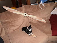 Name: P4200681.jpg