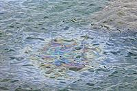 Name: Arizona_Memorial_oil.jpg