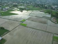 Name: Mother-in-law's Rice Paddy.jpg