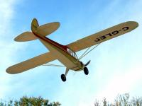 Name: small-cub-flying.jpg