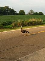 Name: Photo Aug 19, 9 14 46 PM.jpg