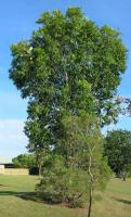 Name: In tree No 2.jpg
