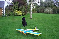 Name: CIMG0981.jpg