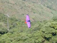 Name: bat flying s.jpg