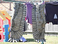 Name: DSCF3596.jpg