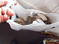 Name: Cat in a bag 001.jpg