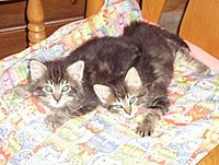 Name: New kittens.jpg
