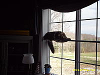 Name: Levitating cat 001.jpg
