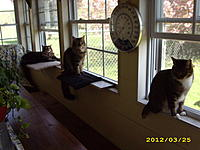 Name: window kittys 011.jpg