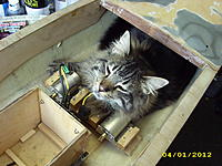 Name: Catboat 002.jpg