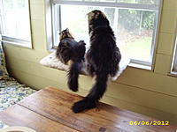 Name: tails 003.jpg