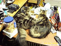 Name: kittys on bench 001.jpg