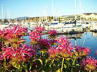 Name: 100_5872.jpg Views: 64 Size: 284.6 KB Description: all a buzz in the harbor
