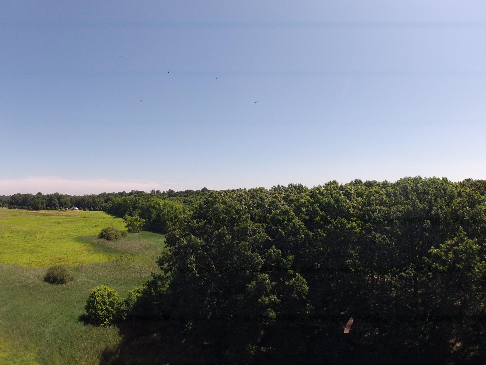 Half a dozen hawks circling upper center, but lower right corner is a big hawk investigating my DJI F450