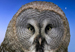 TheNightowl's Avatar
