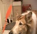 Herleman's Avatar