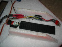 Name: FireFly 018.jpg