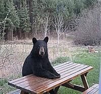 Name: bearck.jpg Views: 28 Size: 55.3 KB Description: