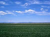 Name: blueskies-greengrass.jpg Views: 322 Size: 51.3 KB Description: Blue Skies in the Southwestern U.S.: insert a dreamy sigh. :)