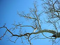 Name: EasyStar#1 in Tree - DSCN2120.jpg Views: 264 Size: 148.3 KB Description: