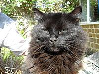 Name: 033.jpg Views: 124 Size: 307.0 KB Description: Tomcat