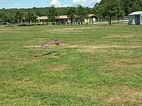 Name: 2010-09-14 12.44.55.jpg Views: 93 Size: 139.3 KB Description: Second landing!
