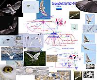 Name: 190902 SnowyOwl35iV V2-10 for Flight  longSSPipe43mm .jpg Views: 7 Size: 2.72 MB Description: