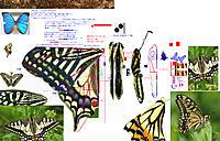 Name: 180902 Butterfly 20-5 90cm 7mmGear-Arm .jpg Views: 6 Size: 2.68 MB Description: