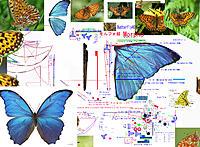 Name: 190902 Butterfly46 120cm 9mmGear-Arm.jpg Views: 4 Size: 2.75 MB Description: