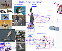 Name: 170416 Duck61iV for trainning ShortWing Tail.jpg Views: 39 Size: 926.8 KB Description: