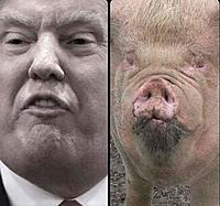 Name: Trump's likeness!.jpg Views: 4 Size: 115.7 KB Description: