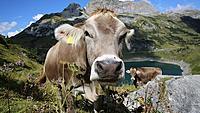 Name: Swiss cowbell.jpg Views: 6 Size: 145.6 KB Description:
