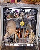 Name: dog_in_dishwasher.jpg Views: 243 Size: 12.2 KB Description: