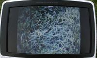 Name: fpv39.jpg