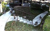 Name: turkey01.jpg