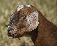 Name: sheep05.jpg Views: 66 Size: 1.21 MB Description: